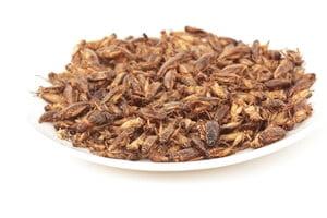 Bug Bazaar Produkter