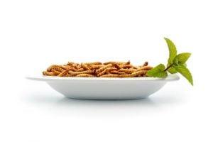 Att äta mjölmaskar får dig må bra!